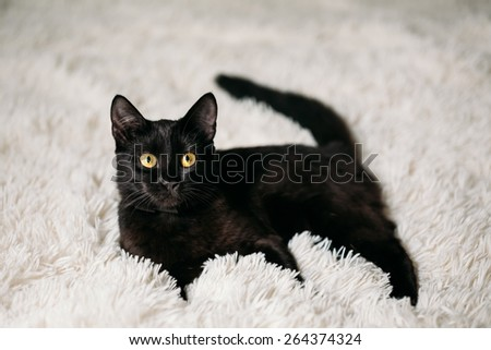 Peaceful Black Female Kitten Cat Lying In His Bed On A White Rug