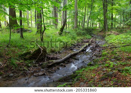Peaceful forest stream flow down among stones in summer Bieszczady Region - stock photo