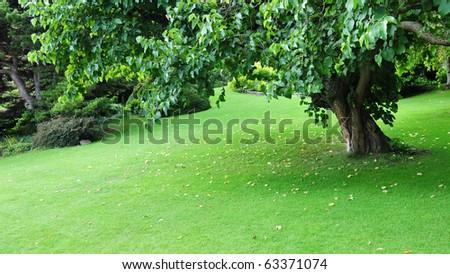 Peaceful Green Garden - stock photo