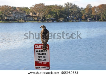 Peaceful Lake Virginia, in Winter Park, Florida, north of Orlando, with a dangerous wildlife sign, and osprey sitting on it.