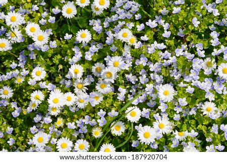 Peaceful Meadow with Wild Flowers in Spring - stock photo