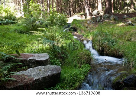 Peaceful mountain stream flows through lush forest - stock photo