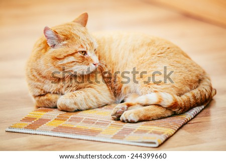Peaceful Orange Red Tabby Cat Male Kitten Curled Up Lying In His Bed On Laminate Floor. - stock photo