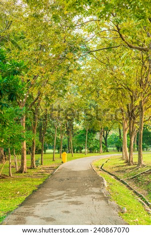 Peaceful park in the city with sun light, summer park road - stock photo