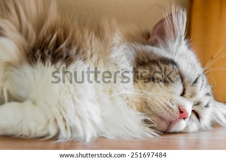 Peaceful red tabby cat curled up sleeping in the house, lie down - stock photo