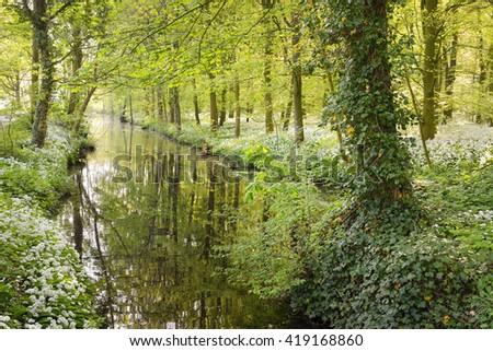 Peaceful river in a spring forest with blooming white flowers. Wild garlic (Allium ursinum) in Stochemhoeve, Leiden, the Netherlands - stock photo