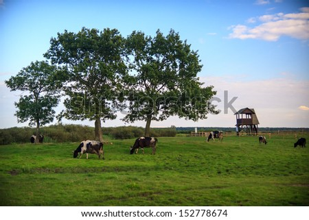 Peaceful view of cows grazing on meadow - stock photo