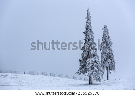 Peaceful winter landscape with two snow covered fir trees and wooden fence on a gray gloomy foggy day. Copy space. - stock photo