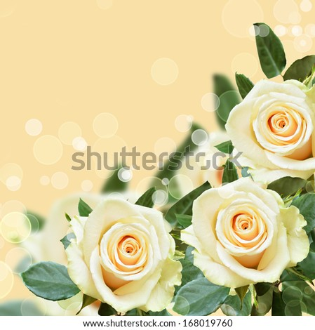 Peach background with white roses in a corner - stock photo