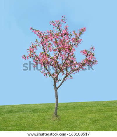 peach blossom bloom in an lawn