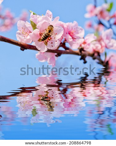 peach flower and bee