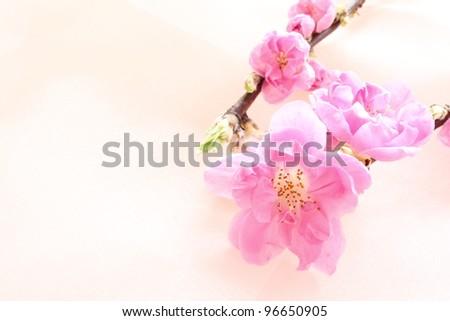 Peach flower on pink silk