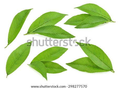 Peach leaves isolated on white background - stock photo