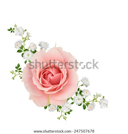 Peach roses with spray of small white roses, isolated on white. - stock photo