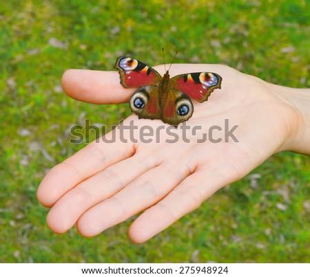 Peacock butterfly (Aglais io, Nymphalis io) on an open palm - stock photo