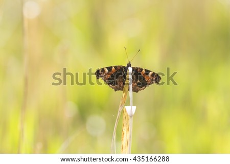 Peacock butterfly (Aglais io) resting in a meadow during early Spring season. Front view, wings open under bright sunlight and colors. - stock photo