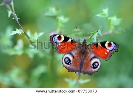 Peacock Butterfly on green background - stock photo
