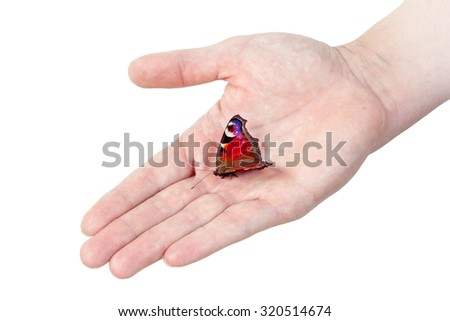 Peacock butterfly on man's hand, isolated on white background