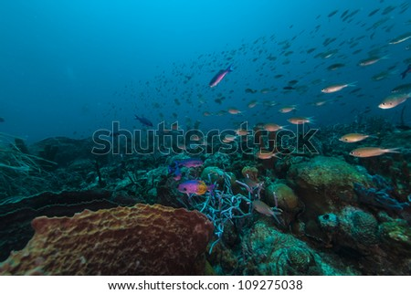 Peacock cyclids and other fish swimming up the reef in Barbados - stock photo
