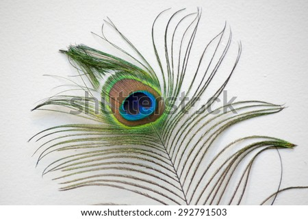 Peacock feather against a white wall