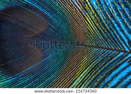 peacock feather close up - stock photo