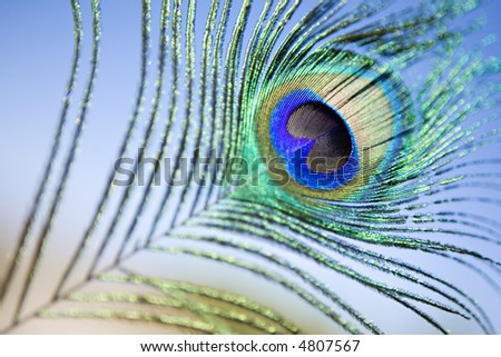 Peacock Feather Eye against Blue Sky Background