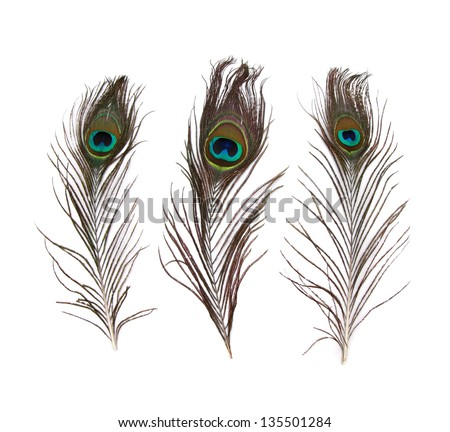 peacock feather isolated on a white background - stock photo