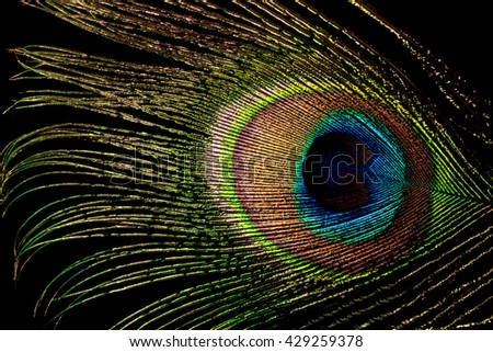 peacock feather isolated on black - stock photo