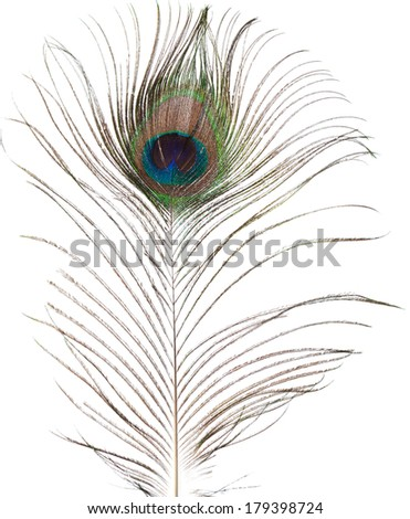 peacock feather isolated on white background