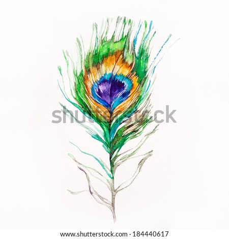 Peacock feather on a white background. Watercolor picture.