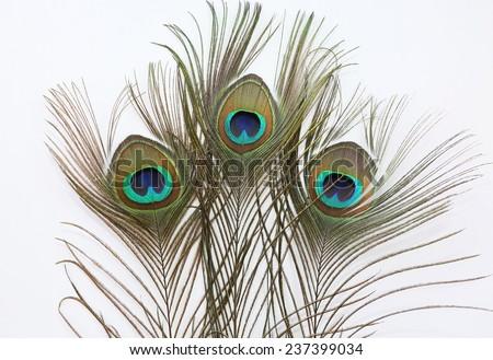 Peacock feather on white background - stock photo