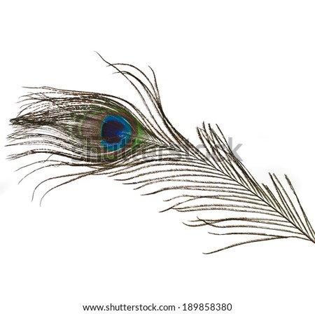 peacock feather plume isolated on white close-up  - stock photo