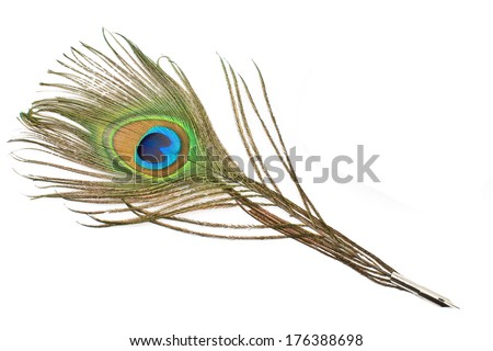 Peacock feather quill  isolated on white - stock photo