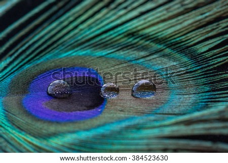 Peacock feather up close with water droplets - stock photo