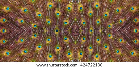 Peacock feathers background. - stock photo
