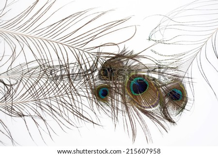 Peacock feathers on a white background - stock photo