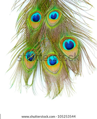 Peacock feathers on white background close-up - stock photo