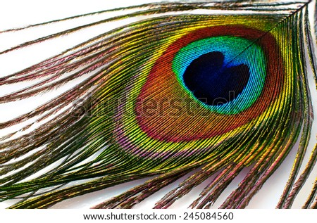 peacock plume on white close-up - stock photo