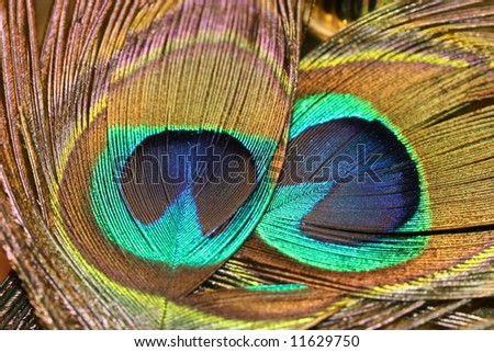 Peafowl Feathers