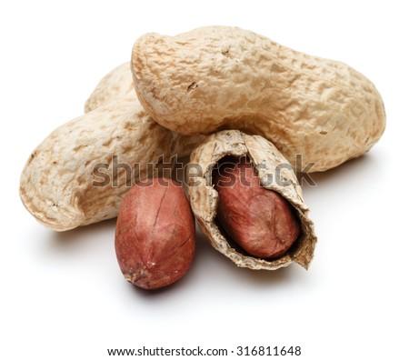 peanut pod or arachis isolated on white background cutout - stock photo