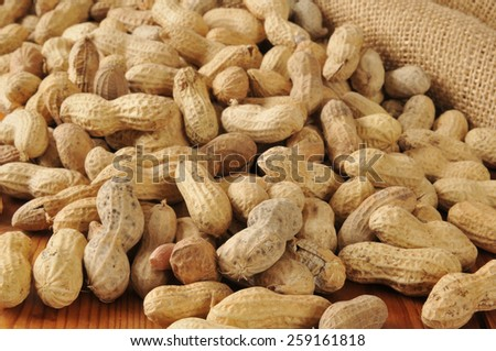 Peanuts in the shells spilling out of a burlap bag