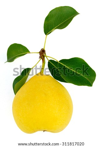 Pear isolated on white - stock photo