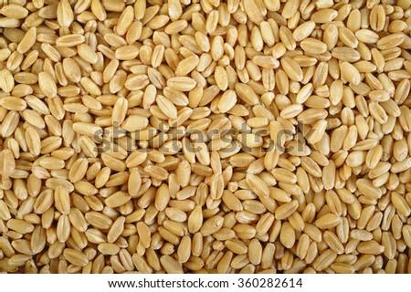 pearl barley grains background - stock photo