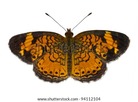 Pearl Crescent Butterfly isoltaed on a white background