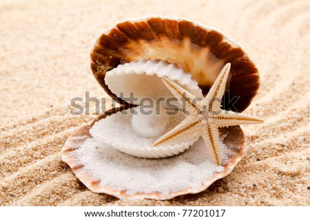 pearl on the seashell . The exotic sea shell . treasure from the sea . - stock photo