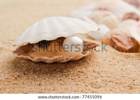 pearl on the seashell . The exotic sea shell . treasure from the sea - stock photo