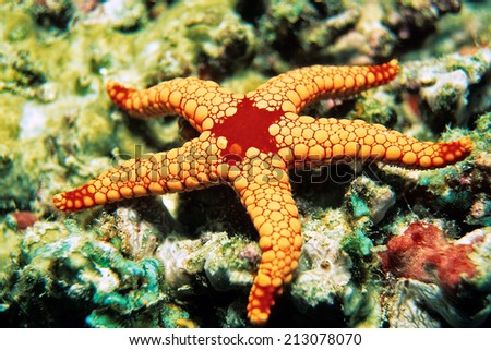 Pearl Starfish, Indian Ocean, Maldives - stock photo