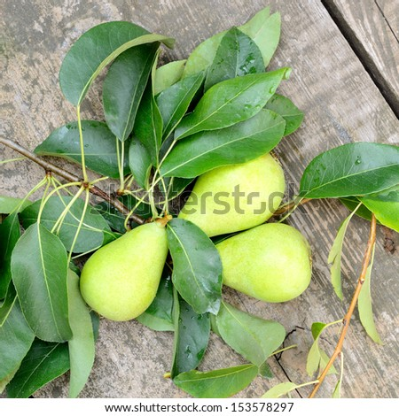 pears freshly picked from the tree with branch and leaves on wooden floor