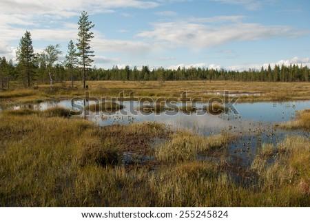 Peat bog - stock photo