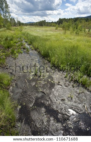 peat bog in a national park Sumava Europe - stock photo
